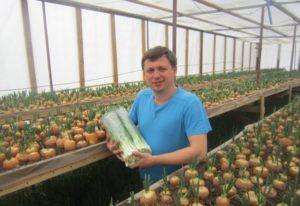 Выращивание зелени в теплице как бизнес: рентабельность, бизнес-план