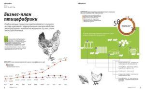 Бизнес-план птицеводство
