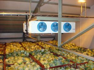 Овощехранилище как бизнес: план отзывы
