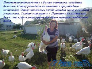 Разведение и выращивание птицы как бизнес: Птицеводство как домашний бизнес