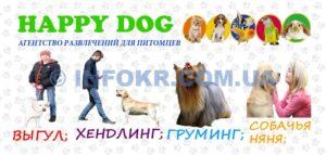 Свой бизнес: услуга «выгул собак». Как организовать агентство по выгулу собак :
