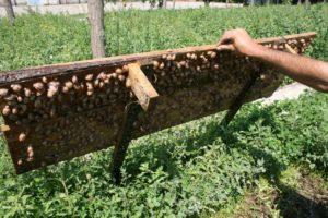 Как грамотно начать бизнес по разведению виноградных улиток в домашних условиях