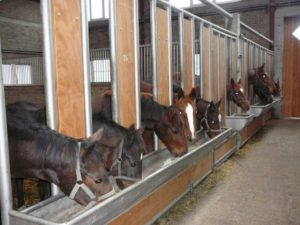 Как построить бизнес на разведении лошадей на мясо