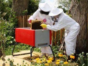 Пчеловодство как бизнес с чего начать как преуспеть. Бизнес-план