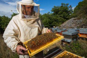 Пасека как бизнес: с чего начать разведение пчел