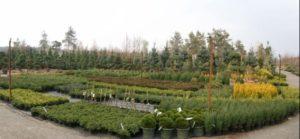 Как открыть питомник растений для продажи саженцев