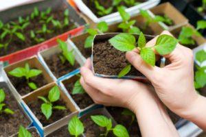 Как открыть бизнес по выращиванию и продаже рассады: особенности