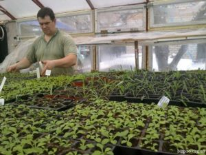 Бизнес на рассаде овощей и цветов: с чего начать рентабельность